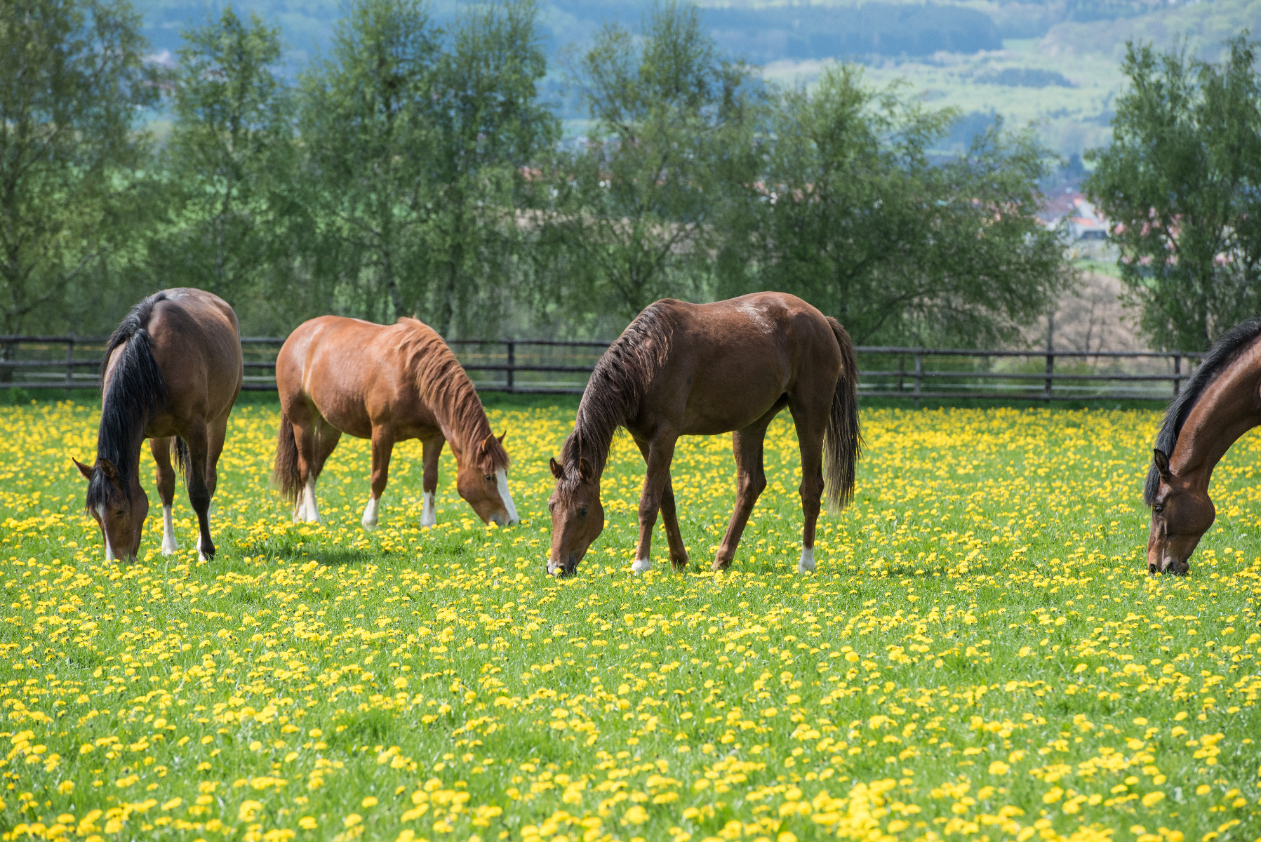 Stübben, Kempen, Gläserne Manufaktur, Sattel, Reiten, Pferd, Reiter, Fütterung, Frühling, Frischfutter, Kraftfutter, Pferde, Stute