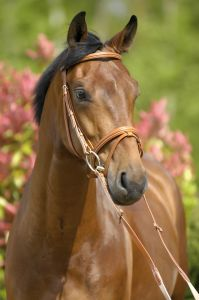 Snaffle Bridle 1000 Wexford