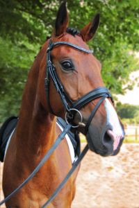 Snaffle Bridle 2010 Magic Tack