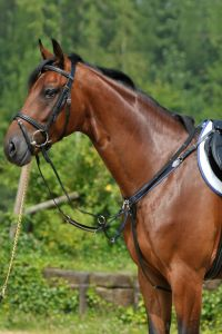 Breastplate with elastic and running attachment