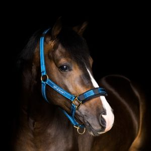Stable halter with reflecting thread